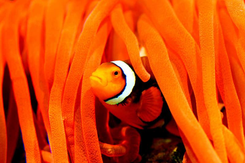 Scuba Diving the Shores of a Top Travel Destination: Curacao